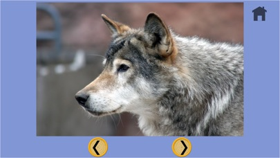 子供のためのオオカミやボーリング - 広告なし screenshot1