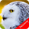 Falconry For Beginners -  Control Method