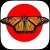 Samurai Butterfly