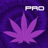 Strains Pro - An Advanced Breeder's Guide to World's Distinctive Cannabis