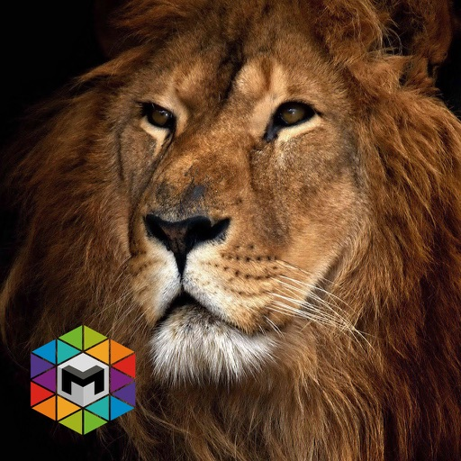 My Lion Simulator iOS App