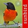Bird Id USA NE - Identification Guide to North East American Backyard Birds