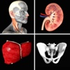 Anatomy Quiz+ anatomy quiz