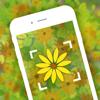 Garden – Identificar Flores