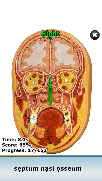 Anatomy Star - Head and Neck by Martin Morat
