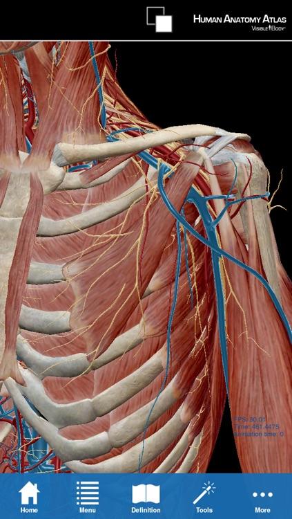 Human Anatomy Atlas for Springer (Menselijke Anatomie Atlas voor ...