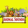 Animal Sounds For Babies | learn and entertain with fun animal sounds
