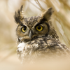Owl and Owl Pattern Wallpapers HD: Quotes Backgrounds with Art Pictures