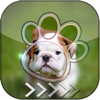 Aoochai Chanlekla - BlurLock - Cute Puppy : Blur Lock Screen Photo Maker Wallpapers Pro  artwork