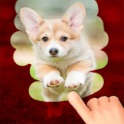 A Dog game to scratch Hidden Pics - Mini game for Kids - Playing cool breed games - animal best dogs pics