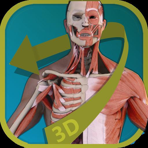 Visual Anatomy - Human Body