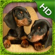 Dachshund Simulator - HD