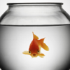 Fish HD Wallpaper for iPad, iPod & iPhone