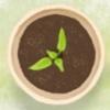 家庭阳台种菜大全 - 家庭绿色菜园最实用的种菜技术宝典