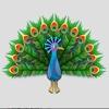 Peacock Cute