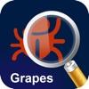 MyPestGuide Grapes