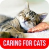 Caring For Cats - Tips on Caring for a Pregnant Cat