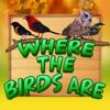 Where The Birds Are birds