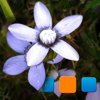 Explorer for Picasa Photo Albums Pro
