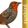 All Birds Northern South America - a field guide to all the species recorded in Ecuador, Colombia, Guiana, Peru, Venezuela