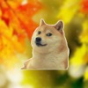 Doge Memes face pack autocollants pour iMessage