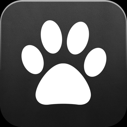Catpad – Cats love to catch the mouse