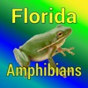 Florida Amphibians - Guide to Common Species