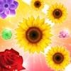 Blossom Crush 2017