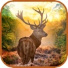 3D Ultimate Deer Hunter - Hunt Stags in Multiple Hunting Seasons to Become The Best Deer Hunter hunter