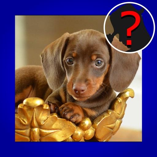 1 - 100 Q&A Quiz Maestro: Top Dog Breed iOS App
