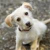 Dog Training - Learn How to House Train a Dog