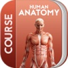 Human Anatomy™