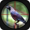 Forest Crow Hunting 3d Free