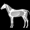 3D Horse Anatomy Software