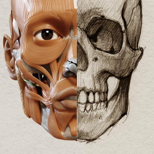 艺术家之3D解剖图