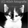 KOch fotografie