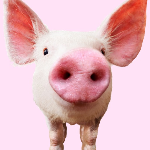 Pig Sounds par Leafgreen LLC