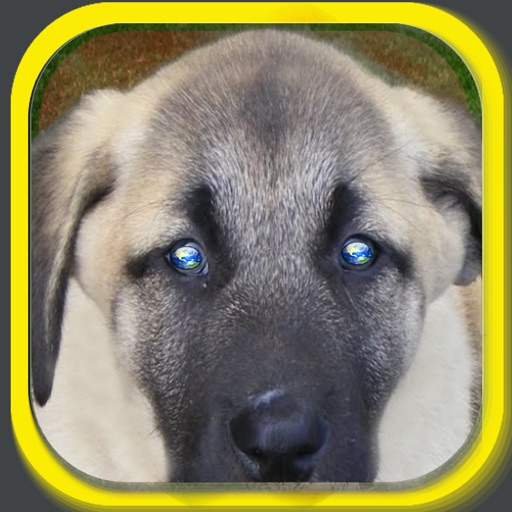 Funny Dog Puzzle iOS App
