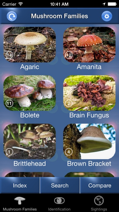 Mushroom Id North America - Fungi Identification Guide to Toadstools and Mushrooms Screenshot