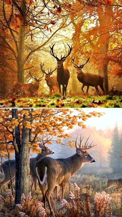 Deer hunting wallpapers best collection of deer wallpapers app download android apk - Hunting wallpaper for android ...