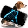 Simulator X-Ray Pet