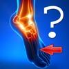 Anatomy Foot Quiz anatomy of foot