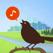 Chirp! Bird Song USA +