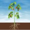 Advanced Plants HD