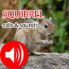 Squirrel Sounds & Call - Real Sounds