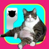 CatMoji-Kitty Emoji Keyboard and iMessage Stickers