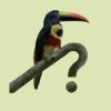 Costa Rica Birds Field Guide