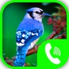 Bird Calls – Animal Sounds & Ringtones Collection