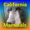 California Mammals – Guide to Common Species