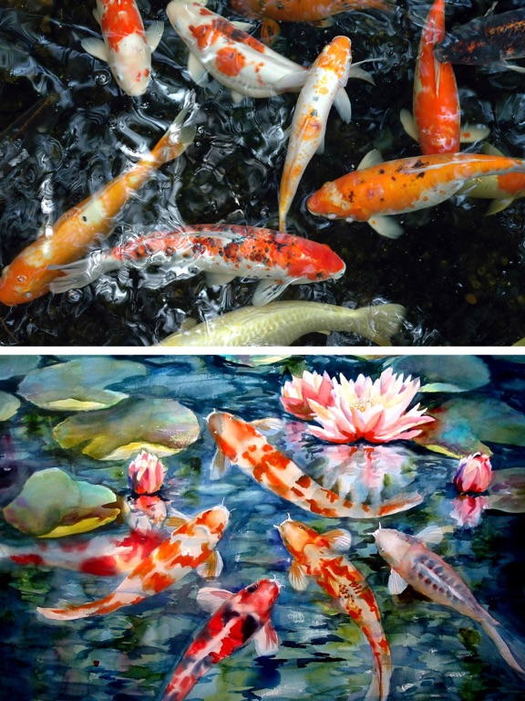Aqua koi fish pond photos of fishes and aquarium app for Koi pond app